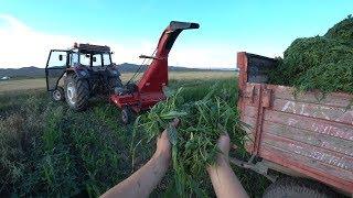 Tarım Vlog #32    Günlük Taptaze Sudan Otu--Hayvanlara Kendimizden Iyi Bakıyoruz