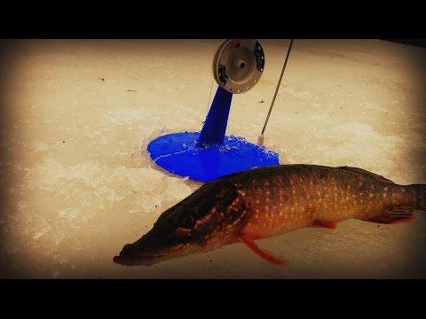 ловля на жерлицу по последнему льду
