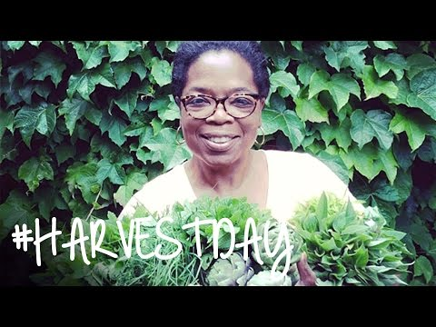You Won't Believe What Oprah Pulled from Her Vegetable Garden | #HarvestDay | Oprah Online