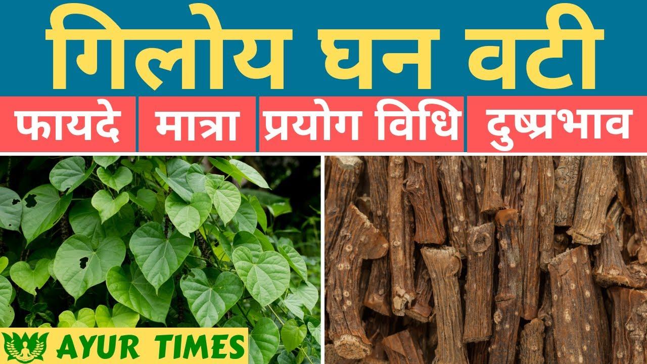 Giloy Ghan Vati Benefits, Uses, Dosage & Side Effects