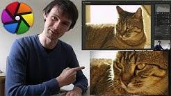 Développement d'une photo de chat avec Darktable