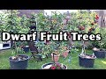 Dwarf Fruit Trees In Container, UPDATE