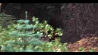 GROUND BREAKING Bigfoot footage proved to be real.
