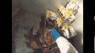 Cleaning up a maggot infested freezer Virginia Beach, Virginia