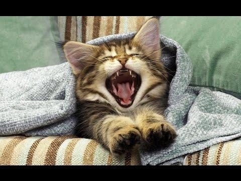 Попробуй не зевнуть. Самые милые животные