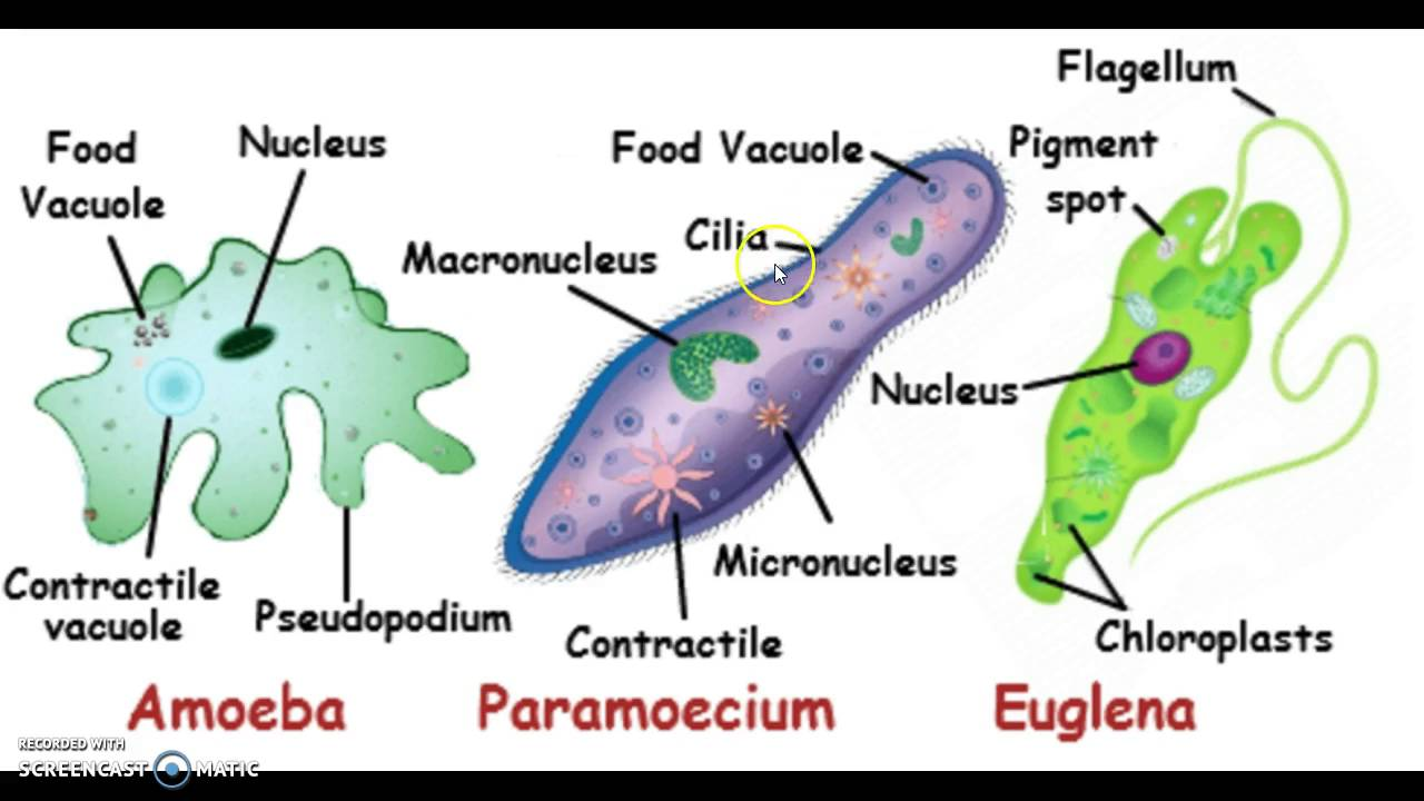 the pros and cons of bacteria organism in biology