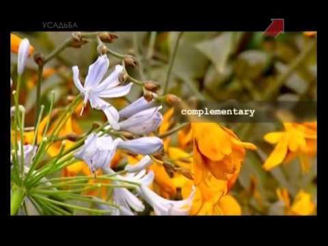 Растения для ландшафтного дизайна и их фото, названия и