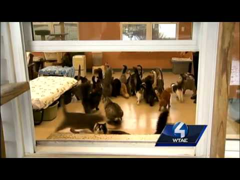 Cage-free shelter offers countless cats second chance