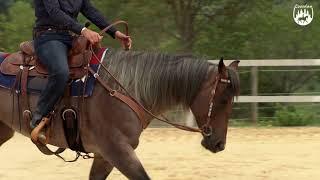Loesdau Lessons: Grundlagen der Reitpferdeausbildung mit Ute Holm Teil 5 Pferd besser lenken
