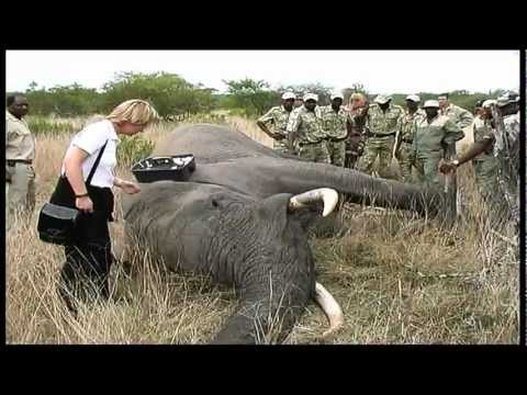 Elephant Capture - South Africa Travel Channel 24