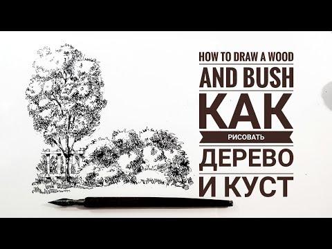 Скетчбук. . Скетчинг для начинающих.  Часть 6. Как рисовать дерево и куст?  Эдуард Кичигин