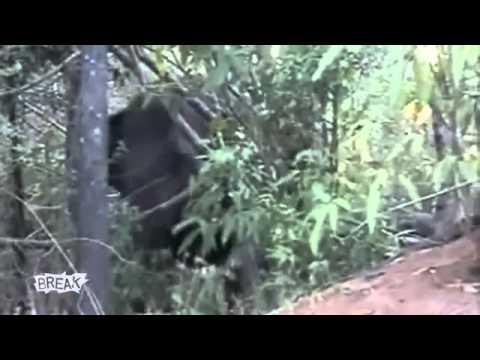 En Komik Hayvan Saldırıları
