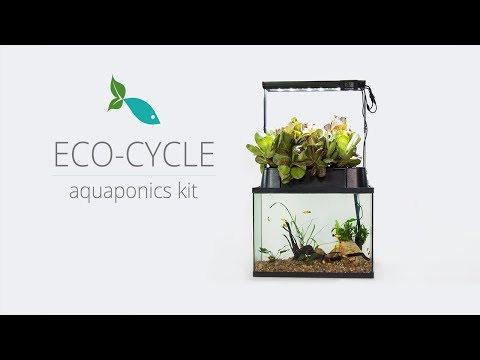 A self-cleaning aquarium that grows organic herbs and veggies!