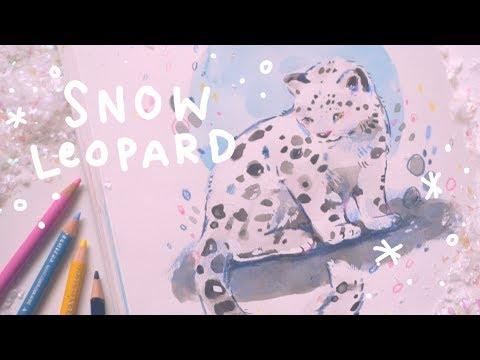 Snow Leopard Sketchbook Page