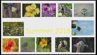 Summer 2018-2019 Nature Challenge