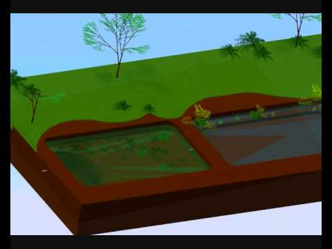 Simulaci n balsa depuradora de agua youtube for Construccion de piletas de agua