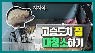 고슴도치 집 대청소했습니다(feat.별거북)_치카치코