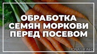 Обработка семян моркови перед посевом   toNature.Info