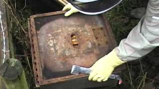 Treating Honey Bees by Dribbling Oxalic Acid