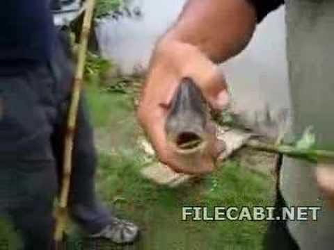 食人鱼有多厉害??!!