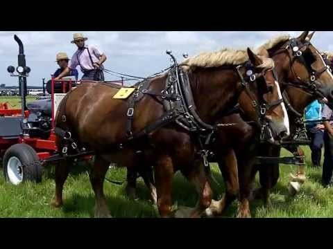 Tilling the Ground with Horses