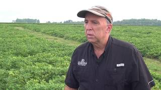 2017 Georgia Peanut Tour - Albert Culbreath discusses TSWV and leaf spot