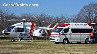 Ambulance Helicopter / ドクターヘリが公園から離陸 20150311 Goro@welsh Corgi コーギー Dog 60fps