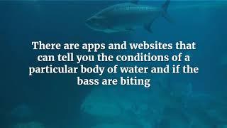 Fishing Tips by Kingston Resort