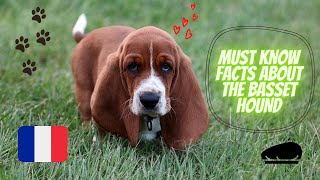 Getting To Know Your Dog's Breed: Basset Hound Edition