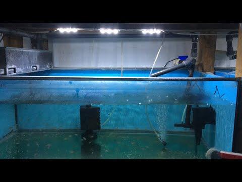 Su Değişimi Nasıl Yapılır?
