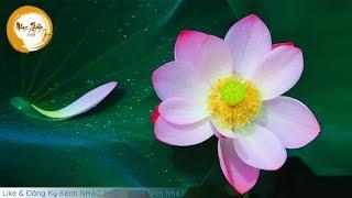 Nhạc Thiền Tịnh Tâm - Thanh Tịnh Hoa Sen - Nhạc Thiền Mới Nhất Hay Nhất 2019