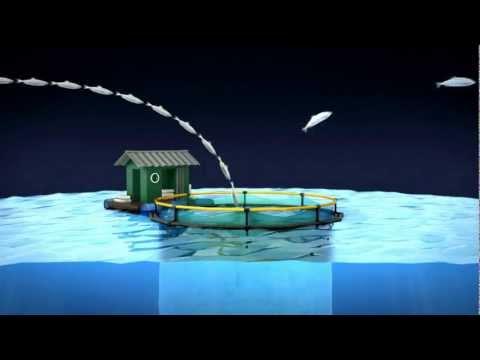 Greenpeace: film d'animation sur la problématique de la surpêche