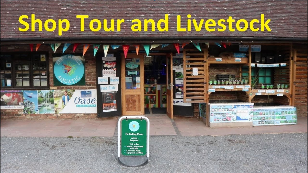 August Aquatic Shop Tour and Livestock Show - Fish and Corals
