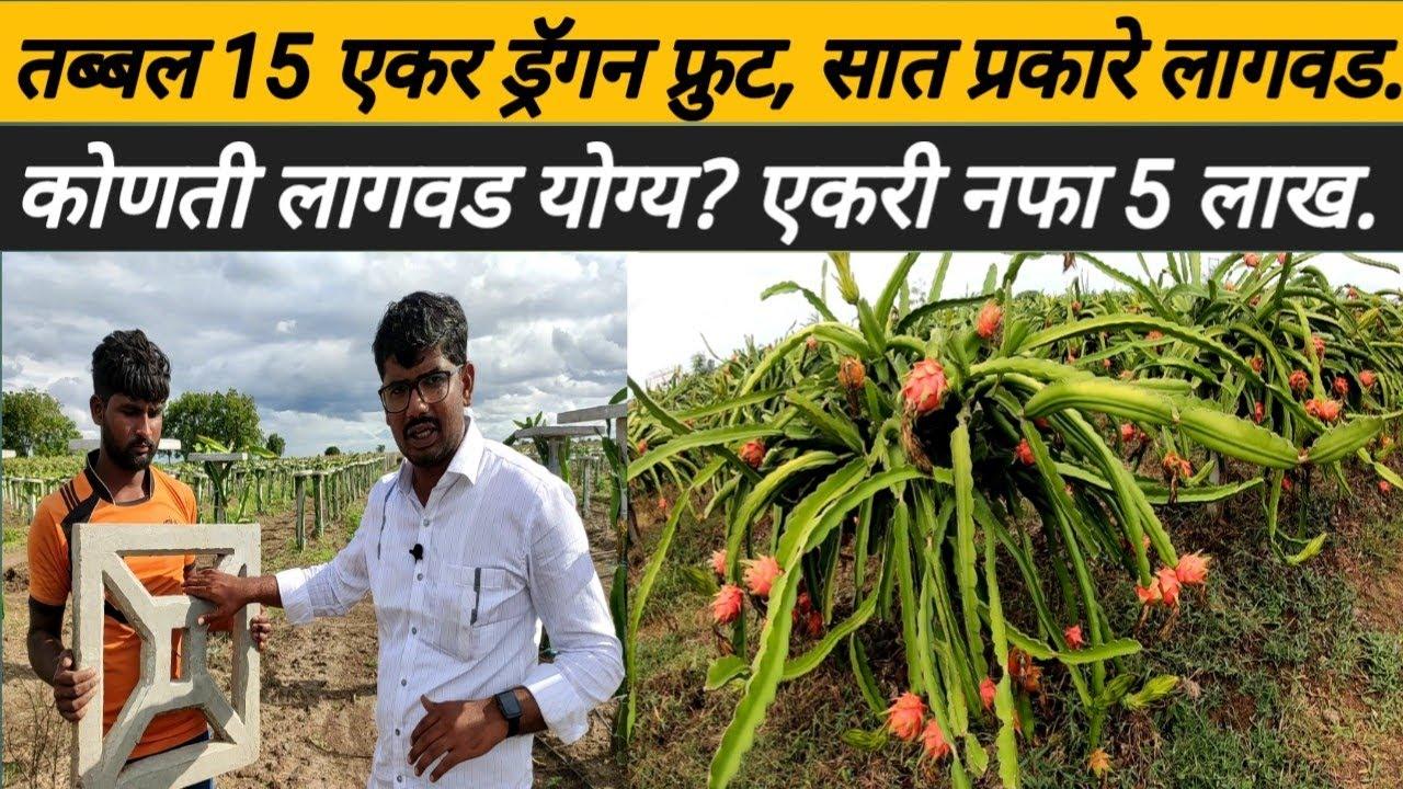 15 एकर ड्रॅगन, 7 प्रकारची लागवड, एकरी नफा 5 लाख रु: Dragon fruit planting: