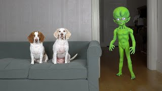 Dogs Pranked by Alien with Sup…