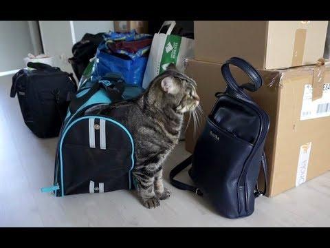 Вопрос: Как будет вести себя кошка в новой квартире?