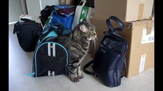 Реакция кота на новую квартиру; Cat's reaction to the new apartment