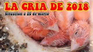 CRIA DE 2018 - SITUACION A 25 DE MARZO