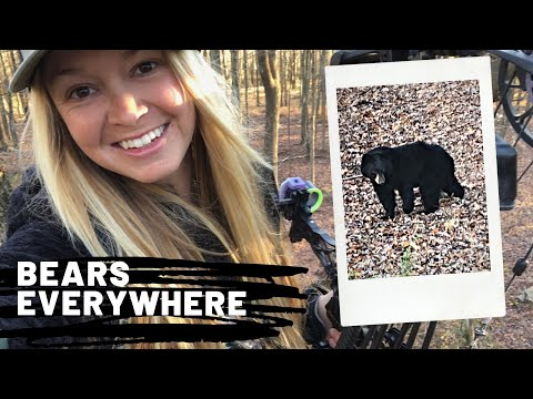 Hunting NJ: BEARS EVERYWHERE!