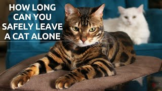 How Long Can You Safely Leave a Cat Alone