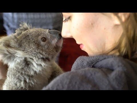 Good Morning Blinky ! (4K Koala) - 동영상