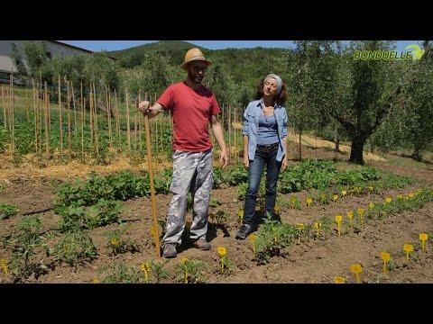 Come coltivare i pomodori con la doppia rincalzatura - Bonduelle TV - A spasso nell'orto
