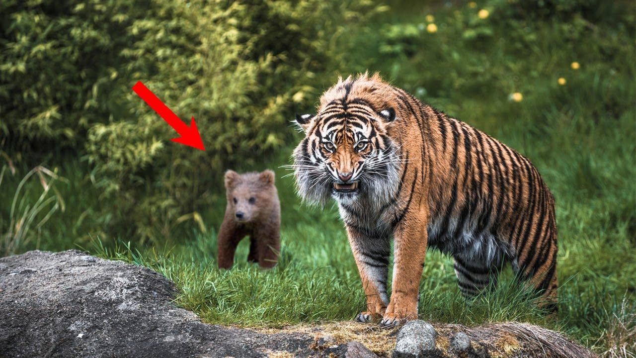 ЦЕПЛЯЯСЬ когтями в мужчину, только что ОСИРОТЕВШИЙ медвежонок понимал, что он единственная надежда