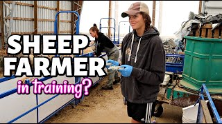 Working SHEEP with my TEENAGE DAUGHTER *FUNNY!* (& how I SELECT REPLACEMENT ewe lambs): Vlog 325