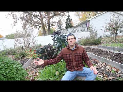 Stop! Before You Build a Raised Bed WATCH THIS VIDEO