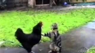 Прикольное видео о животных!
