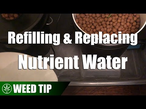 Replacing Vs Refilling Nutrient Water In A Recirculating Hydroponic System