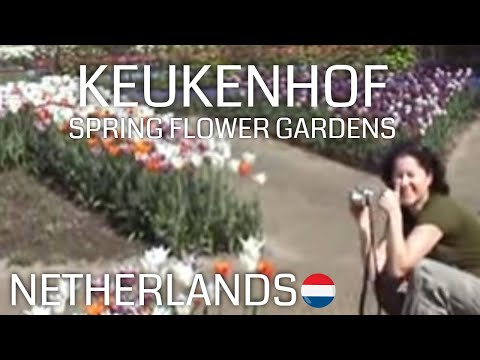 Keukenhof (Spring gardens Holland)