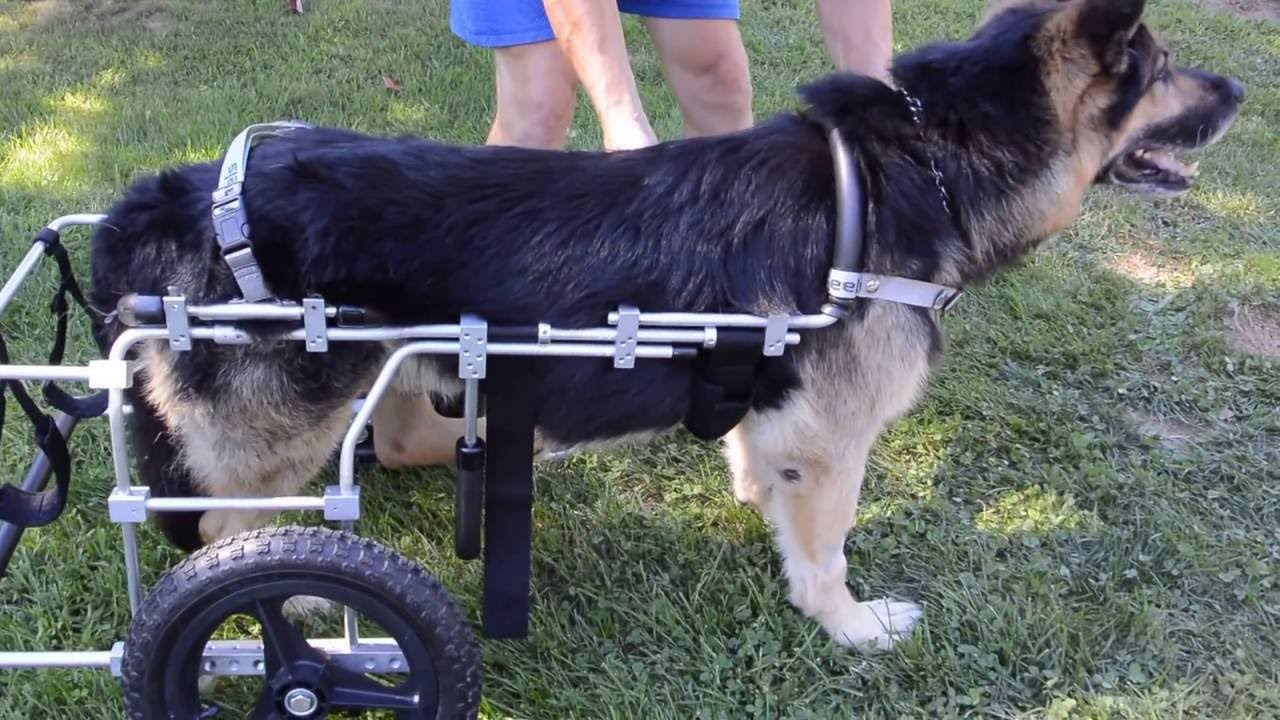 Rear-Wheel Carts - Eddie's Wheels for Pets - The Pet