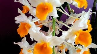 """How to grow Orchids"" 